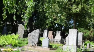 Gravestone tree cemetery — Video Stock