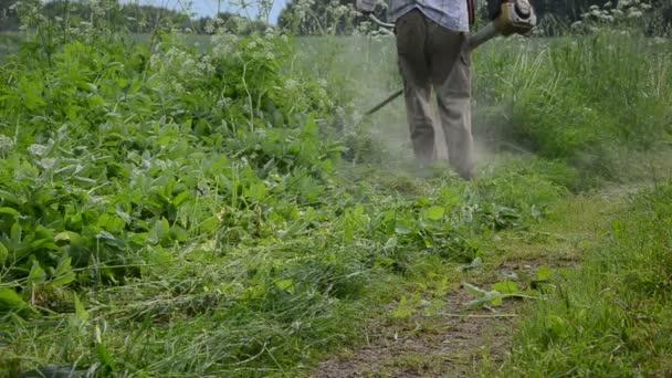 Jardinero corta la hierba alta — Vídeo de stock