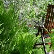 Wooden chair fruit tree — Stock Video