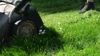 Daisy flower cut grass — Stockvideo