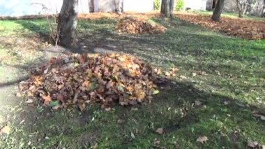 Leaf pile autumn — Stock Video