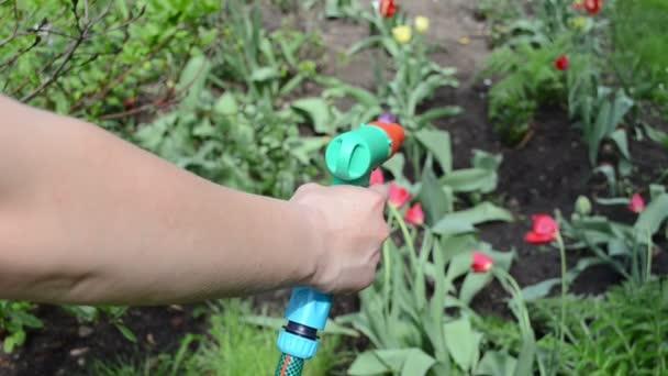 Agua de flor de manguera de mano — Vídeo de stock