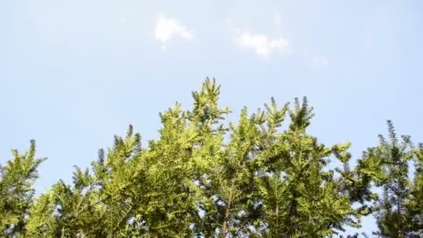 If du buisson branches ciel — Vidéo