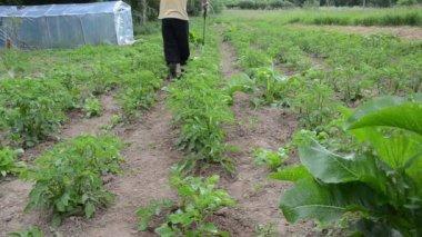Pesticide spray garden — Stock Video