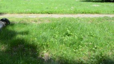 Leg cut grass stone path — Stock Video