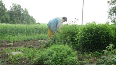 Senior woman gardening — Vídeo de Stock