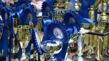 Horse racing cups awards — Stock Video