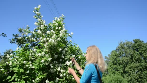 femme ramasser des fleurs de jasmin — vidéo sauletas © #44889973
