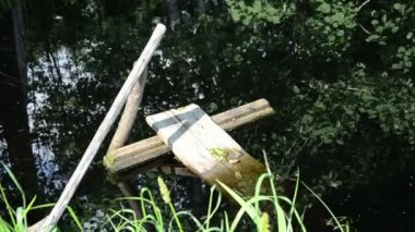 Village pond fallen rotten boards quietly sitting group frogs — Stock Video