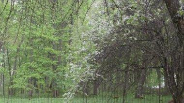 Petals fall garden bloom — Stock Video
