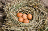 Small chicken eggs in nest of hay outdoor  — Stock Photo