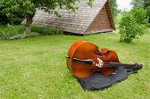 Contrabass musical instrument on summer grass  — Stock Photo