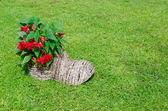 Shoe flower pot with begonias. rural decoration  — Stock Photo