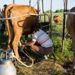 Farmer using new technologies in milking cows — Stock Photo #45760473