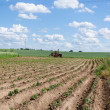 Tractor plough potato plants in field — Stock Photo