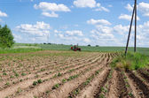 Tractor plough potato plants in field  — Stockfoto