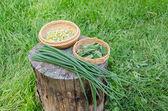 Herbal set and garden green onion on stump outdoor  — Stock Photo