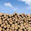 Pile of cut logs on blue sky background — Stock Photo #47145299