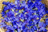 Fresh blue cornflower blossom background  — ストック写真