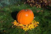 Big pumpkin and leaves dekoration in yard  — Stock Photo
