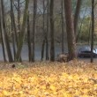 Hill leaves autumn car — Stock Video