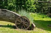Sedges grow near old wooden carriage wheel  — Stockfoto