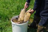 Male hand holds big bream of  bucket full of fish — Stockfoto