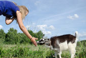 Girl feed goatling scratch snout   — Stock Photo