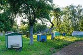 Row hives between tree sun lit rural garden   — Stock Photo