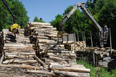 Cranes claw stack of timber logs at lumber mill  — Stock Photo