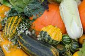 Close up autumn vegetable marrow pumpkin flower   — Stock Photo