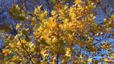 Leaves wind sway — Stock Video