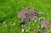 Dead mole in traps meadow to the powdery sunk cave — Stock Photo