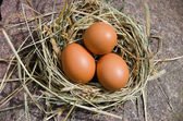 Chicken eggs in nest of hay on stone outdoor — Stock Photo