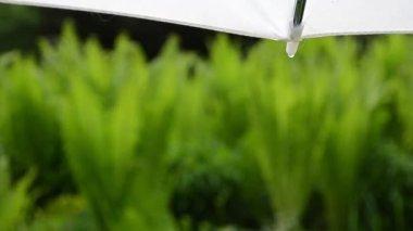 Water drop umbrella rain — Stock Video