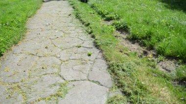 Man cut grass stone path — Stock Video