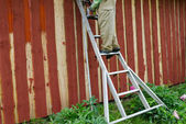 Housepainter man on ladder paint garden house wall  — Stock Photo