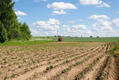 Rural tractor plough potato plants in field  — Stock Photo