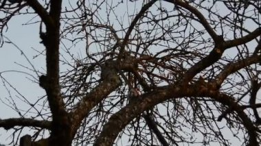 Panorama of branch saw trim in spring tree garden. — Vídeo Stock