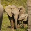 Stock Video: Baby elephant