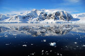 Ice floes in antarctica — Stock Photo