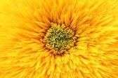 Yellow flower background — Stockfoto