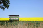 Oilseed rape field with beehive — Stock Photo