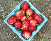 Strawberry in the box — Stock Photo
