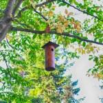 Nesting-box in the tree — Stock Photo