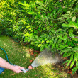Working watering garden from hose — Stock Photo #12803298