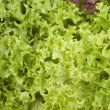 Close-up photo of fresh lettuce leaves — Stock Photo #48150805