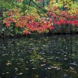 Fall Leaves Over Pond — Stock Photo