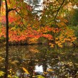 Stock Photo: Autumn Reflections