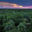 Jungle Canopy — Stock Photo